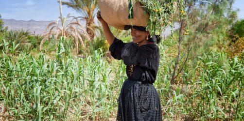Maroko porady